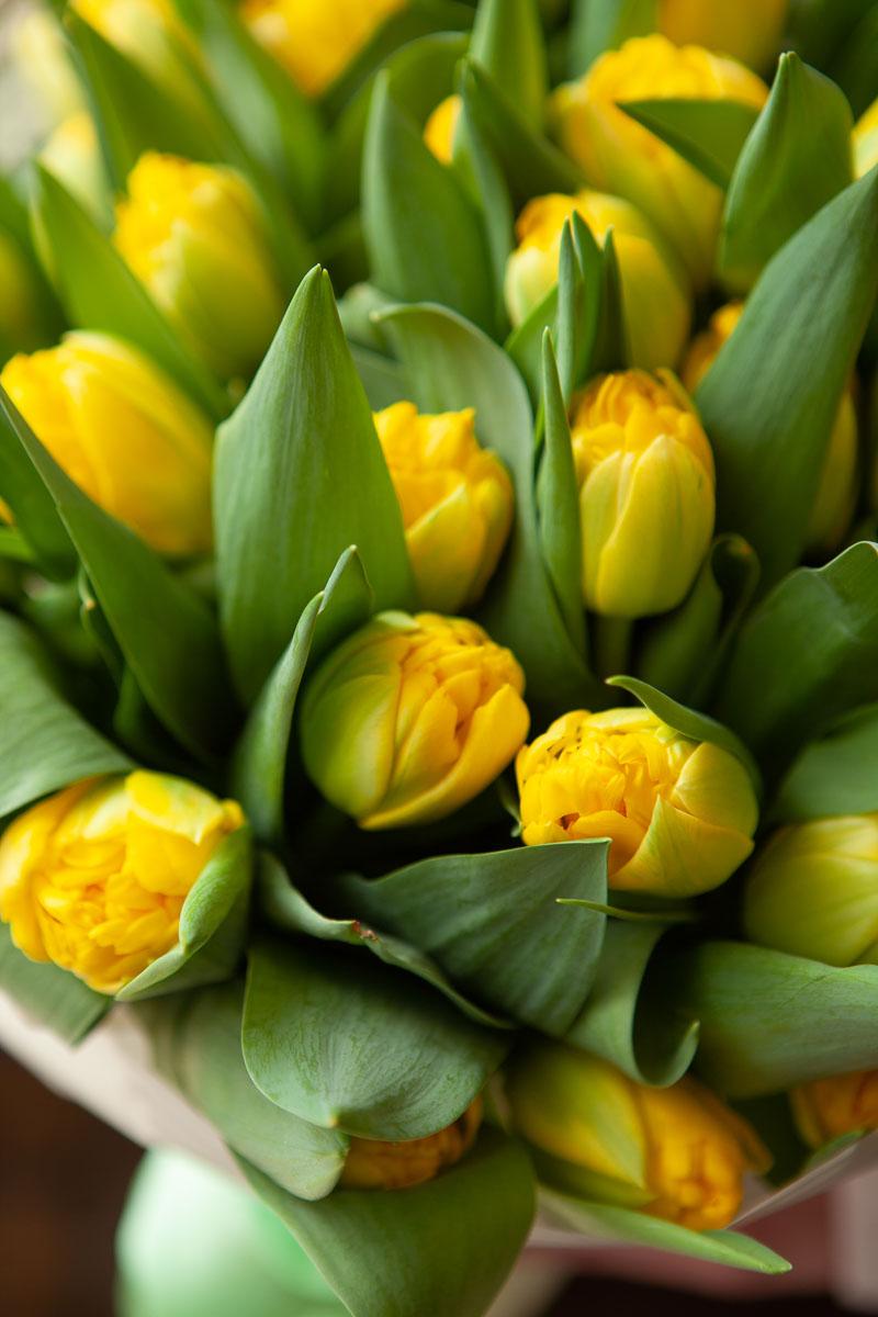 лимонные тюльпаны фото вопросов, нет