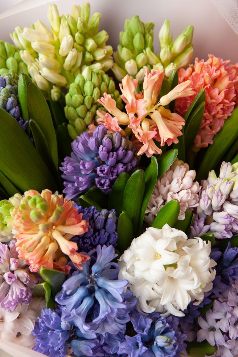 этом цветы гиацинты фото букеты или иначе