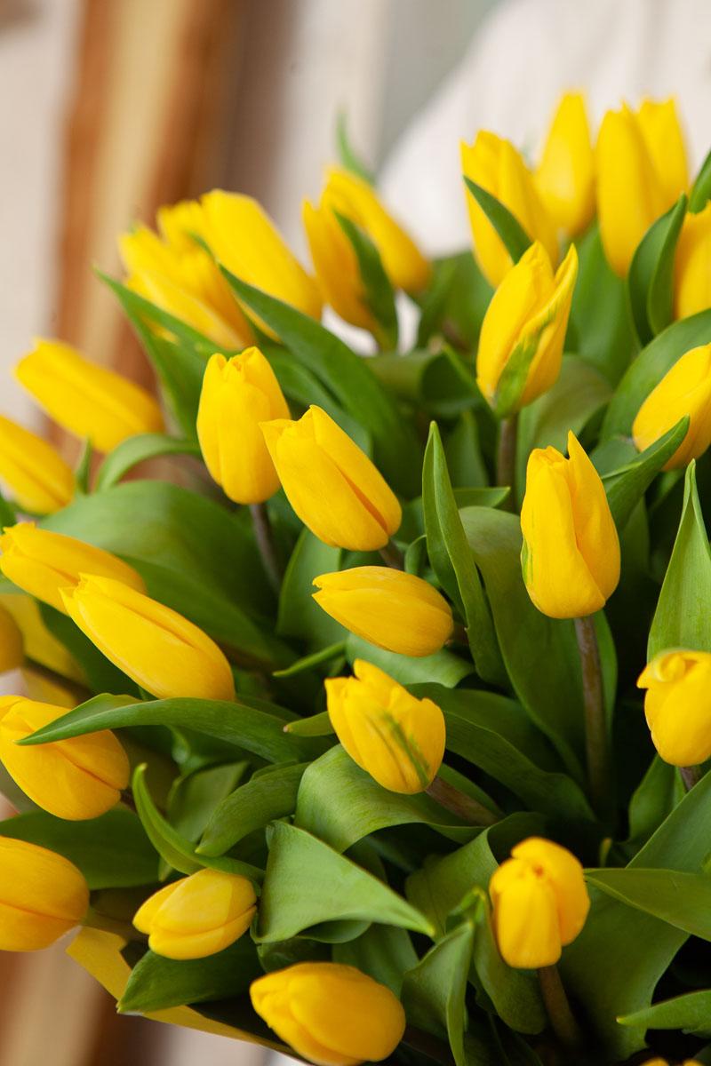 фото букет желтых тюльпанов имитирующие кирпичную кладку