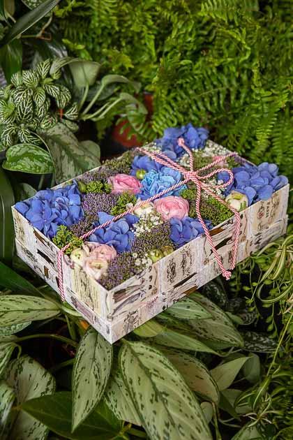 Синяя Гортензия, Ранункулюс и Трахелиум в Коробке купить с доставкой по Саратову