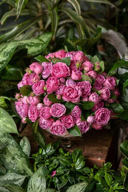 Розовые Пионовидные Розы в Стеклянной Вазе Вишня купить с доставкой по Саратову