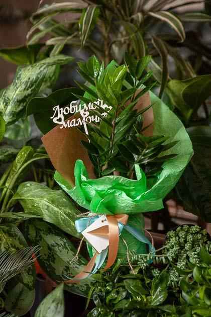 Замиокулкас в Горшке в Подарочной Упаковке Любимой Мамочке купить с доставкой по Саратову