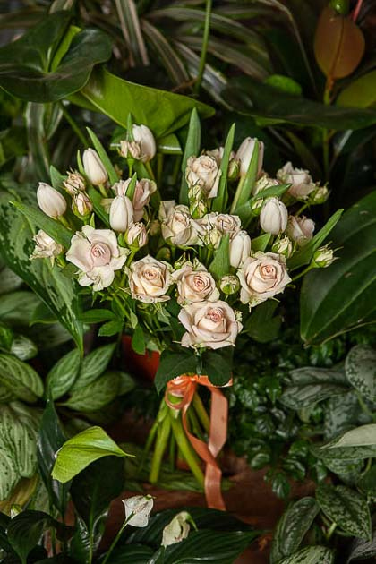 Букет из Кремовой кустовой розы и Белых Тюльпанов - planeta.florist