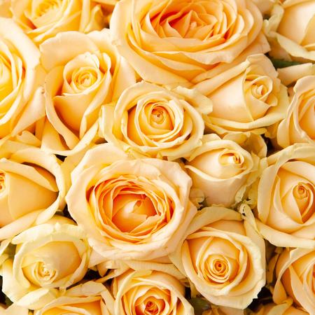 Персиковая роза с доставкой Саратов