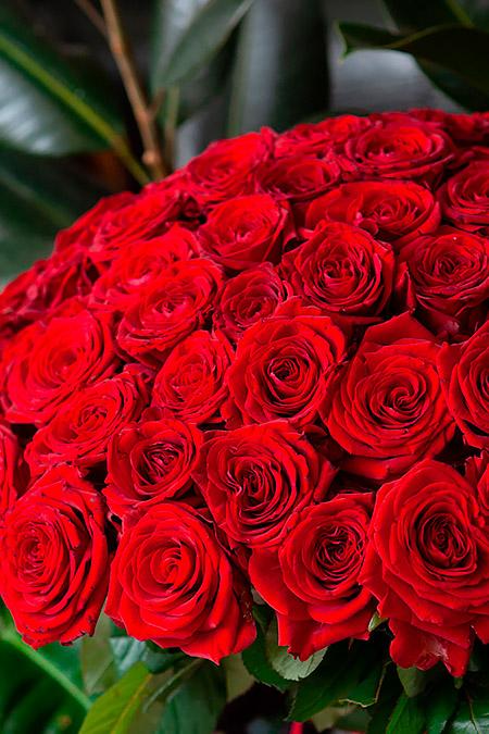 Букет из 51 Красной Розы - ФОТО2