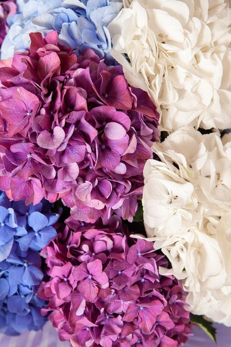 Букет из 11 Гортензии ассорти - planeta.florist
