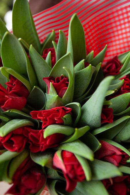 Букет Красных Тюльпанов в Красной пленке Саратов-фото 3