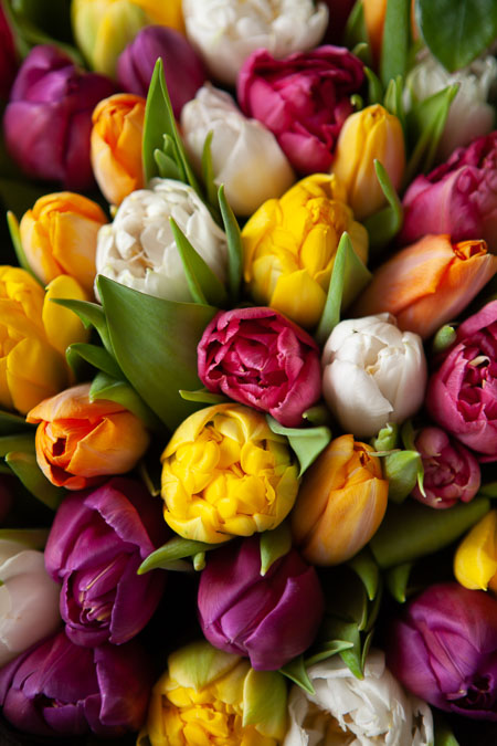 Букет из 51 Тюльпана Премиум микс Саратов - фото 2
