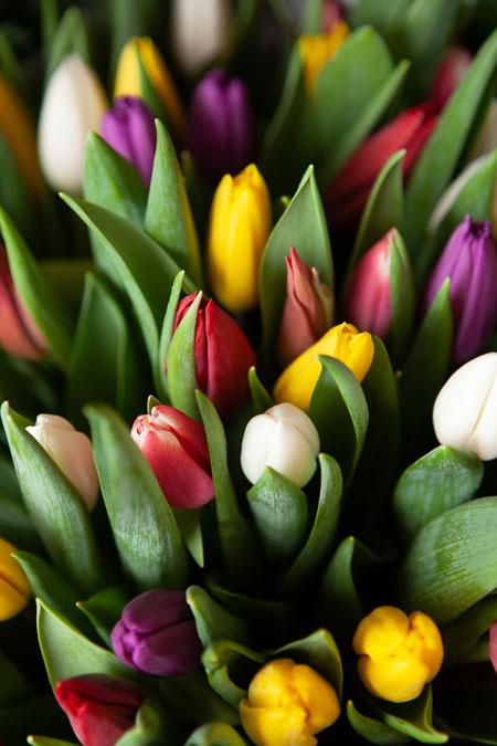 Букет из 101 тюльпана микс Саратов - фото 2