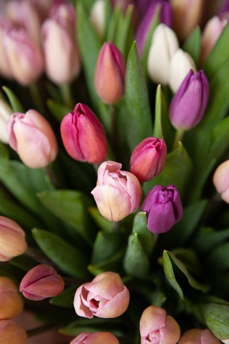 Букет из 101 тюльпана микс из розовых и сиреневых Саратов - фото 2
