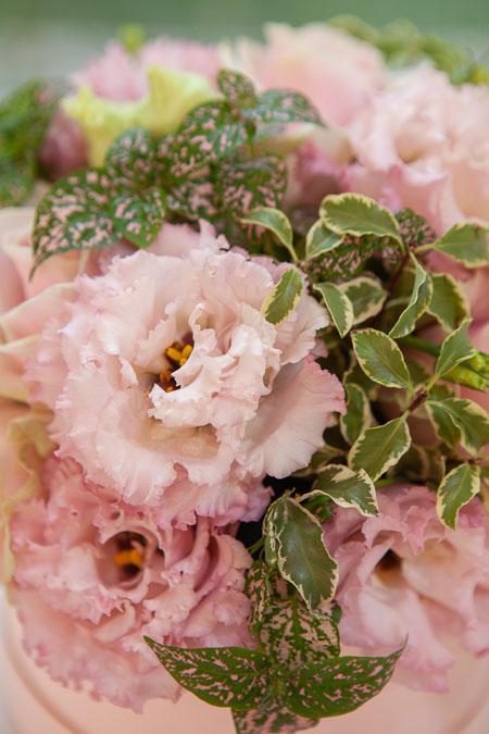 Цветы в коробке: Кремовая Роза, Лизиантус и Фиттония Саратов - фото 2