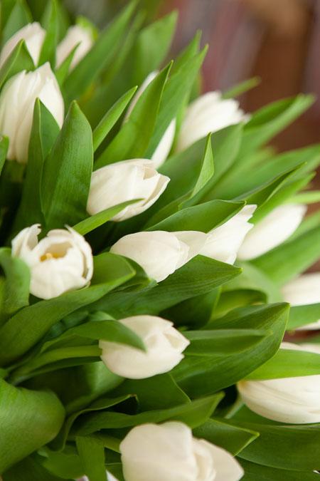 Тюльпан Белый Роял Вёрджин Саратов - фото 2